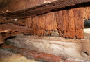 Only some Termites feed on Wood