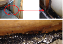 Termites Sneak through Concrete Slabs