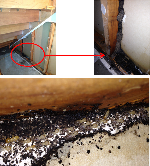 Termites-Sneak-through-Concrete-Slabs