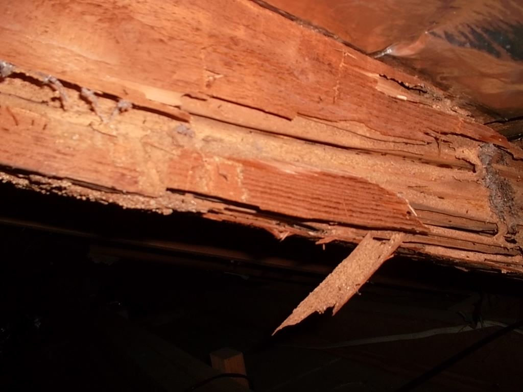 Termite damage and infestation in sydney